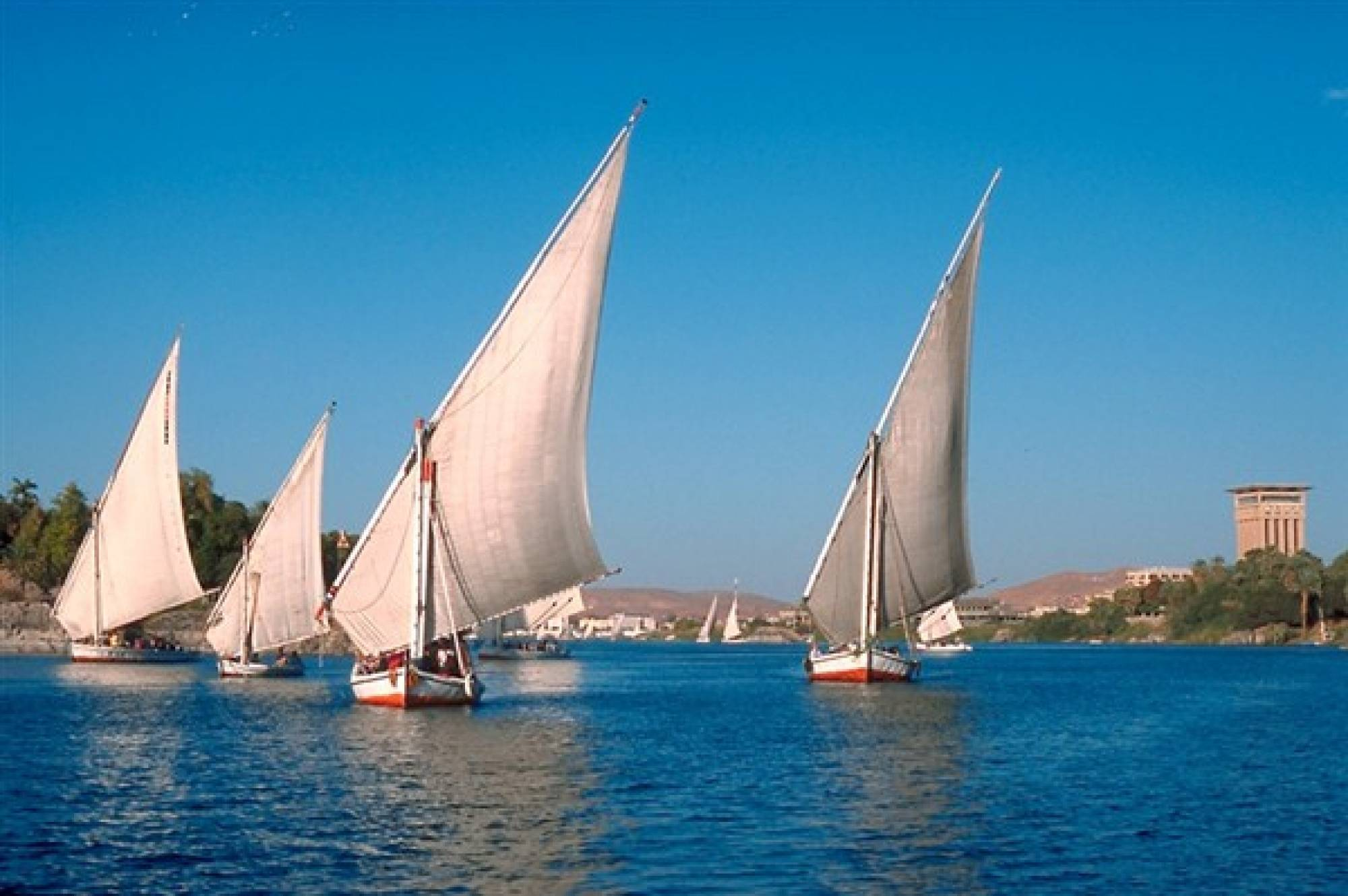Felucca Trip To The Botanical Island In Aswan